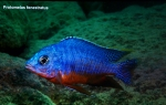 A_L_rdag_Andreas_Spreinat_Dive_sites_at_the_westc_oast_DSC_0226.jpg